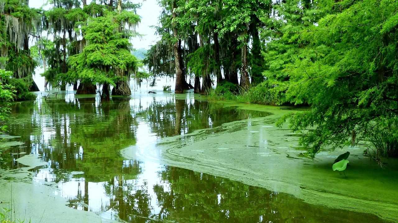 Louisiane, portes ouvertes